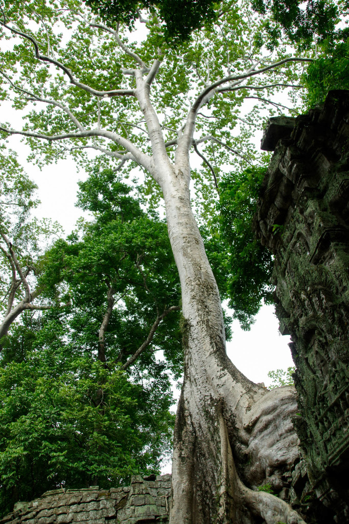 July 17, 2015for blog-Ta Prohm Temple_IMG2042_