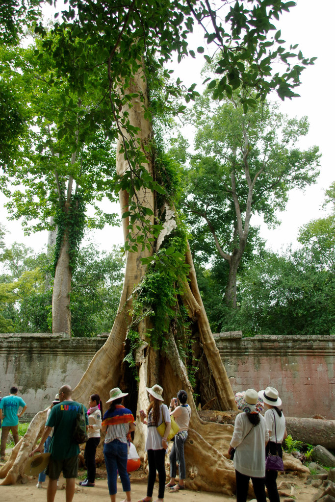 July 17, 2015for blog-Ta Prohm Temple_IMG2044_