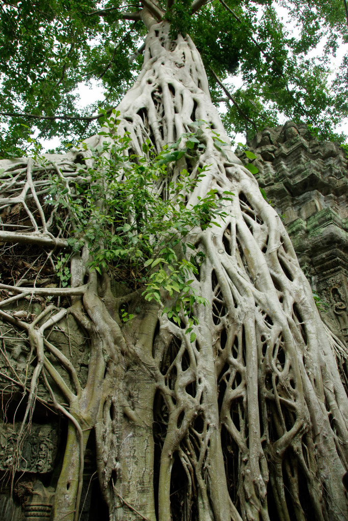 July 17, 2015for blog-Ta Prohm Temple_IMG2061_